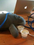 After a few Cafe Cubanos Manatee was ready to WORK